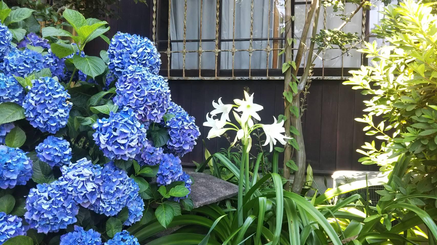 "Denenchofu station☆Claudia Denen-Chofu☆""A tasteful house in high luxury residential area"""